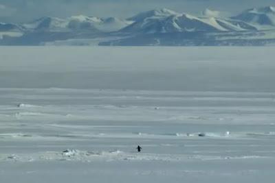 penguin-werner-herzog