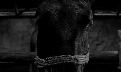 Turin Horse 1